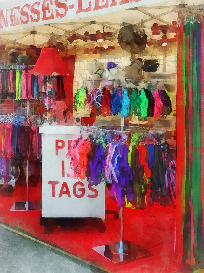 Leash Photograph - Pet Leashes And Harnesses For Sale by Susan Savad