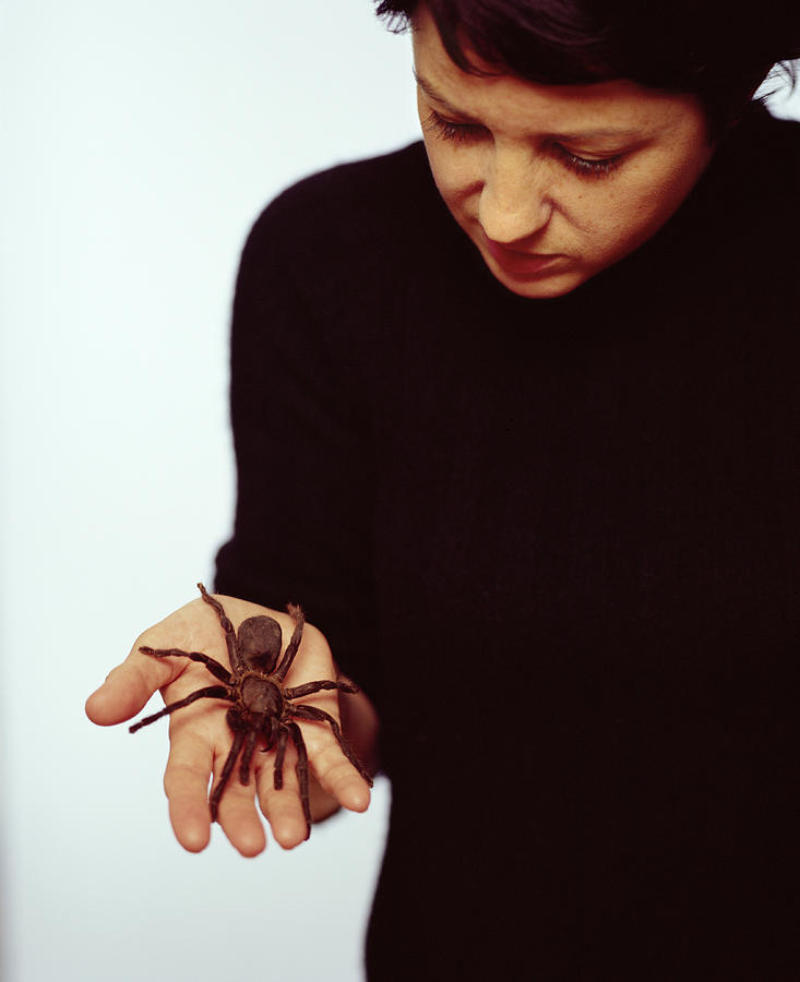 Spider Photograph - Pet Tarantula by Lawrence Lawry