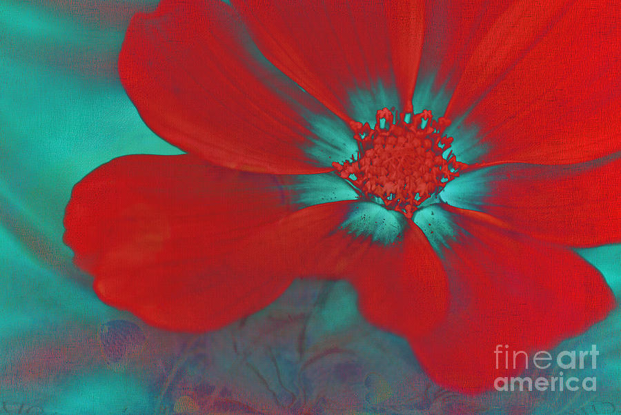 Red Photograph - Petaline - T23b2 by Variance Collections
