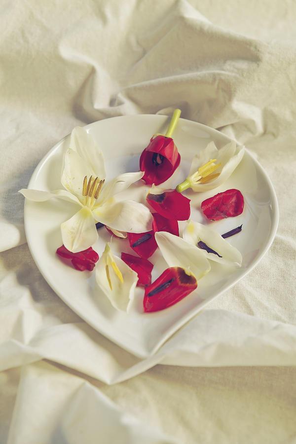 Flowers Photograph - Petals by Joana Kruse
