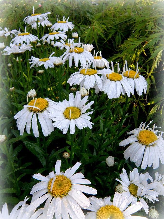 Botanical Photograph - Petals Up by Tanya  Searcy
