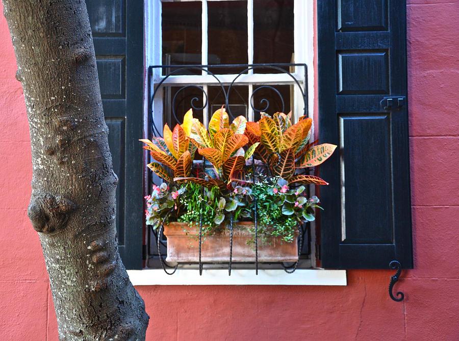 Philadelphia  Alley Window Box Photograph by Lori Kesten