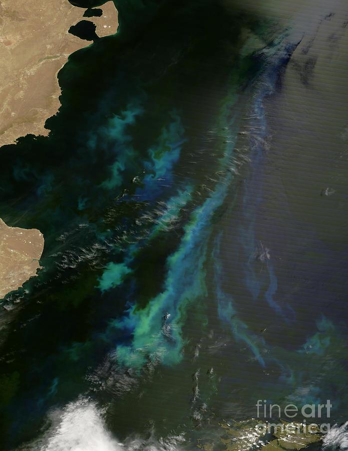Argentina Photograph - Phytoplankton Off Argentinas Coast by Nasa