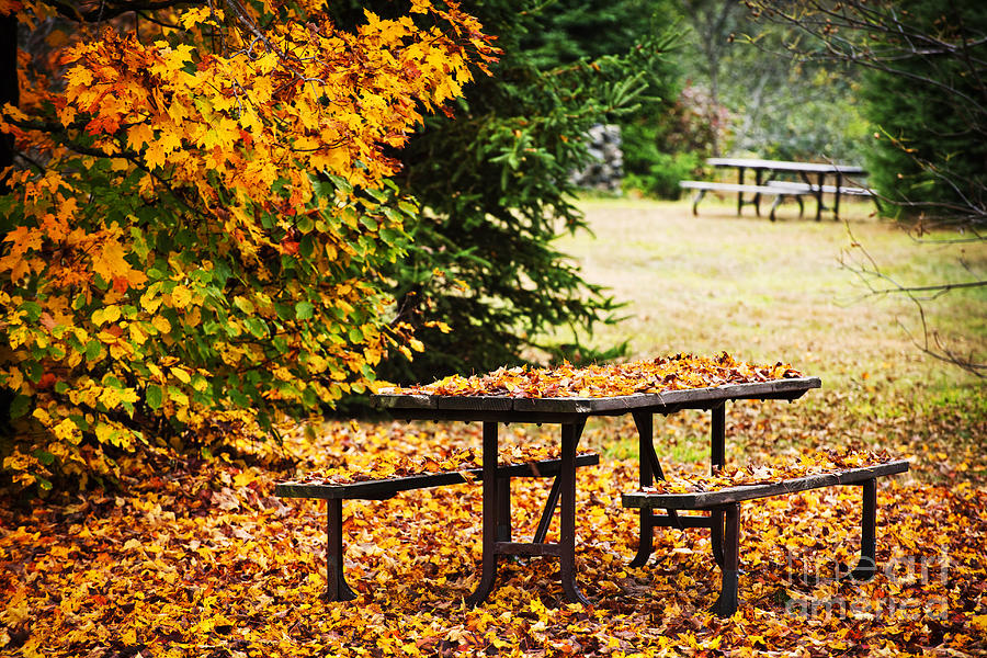 Picnic Table Photograph - Picnic Table With Autumn Leaves by Elena Elisseeva