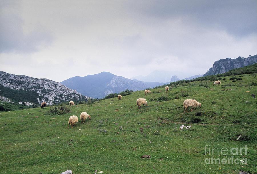 Agriculture Photograph - Picos De Europa by Juan Silva