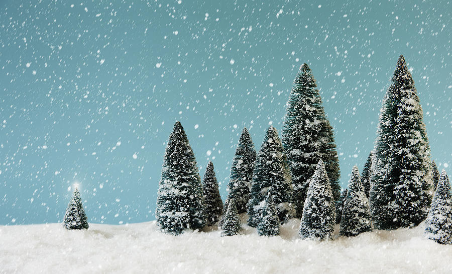 Pine trees covering by snow studio shot photograph by - Images of pine trees in snow ...