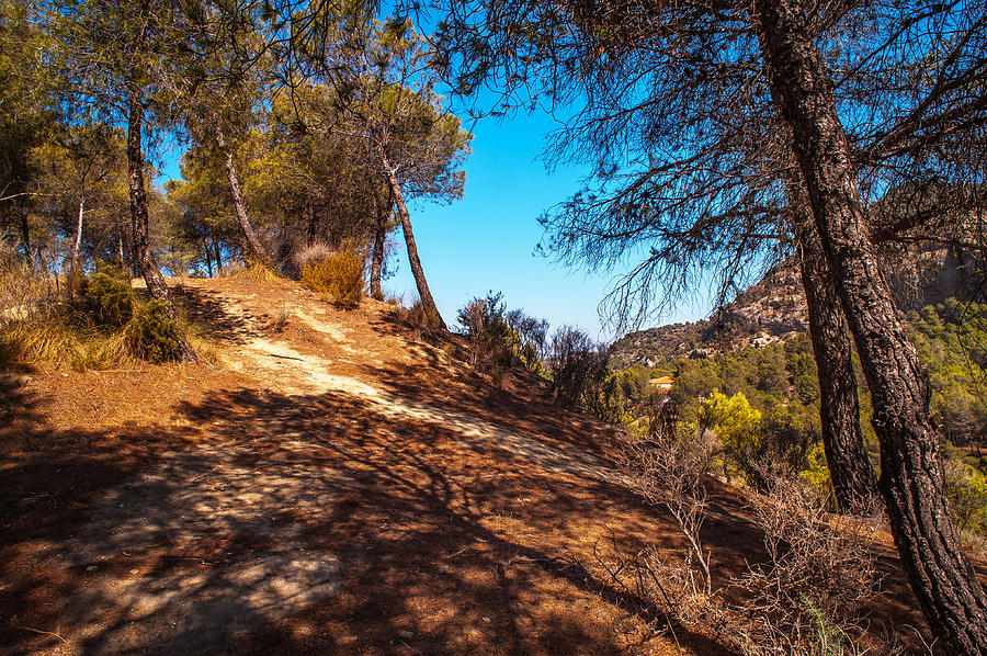 Nature Photograph - Pine Trees In El Chorro. Spain by Jenny Rainbow