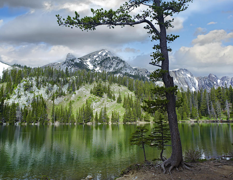 Pine Trees Reflected In Fairy Lake Photograph by Tim Fitzharris