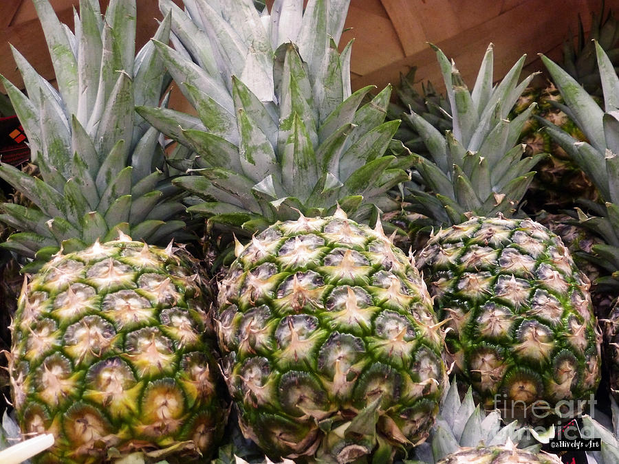 Pineapples Photograph - Pineapples by Methune Hively