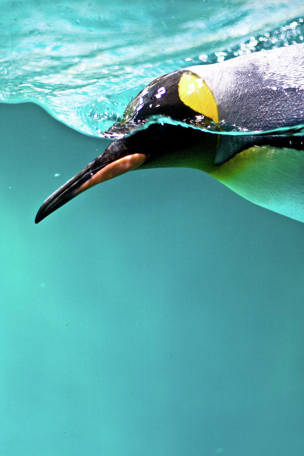Vertical Photograph - Pinguin by Www.photo-chick.com
