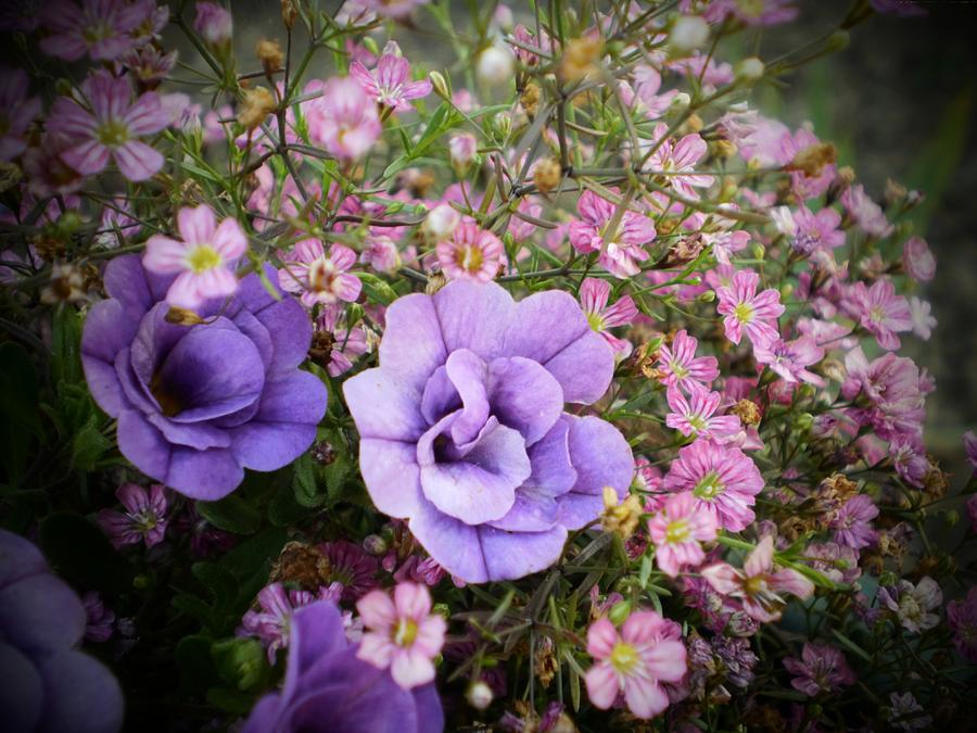 Pink and purple flowers photograph by d j larsen pink flowers photograph pink and purple flowers by d j larsen mightylinksfo