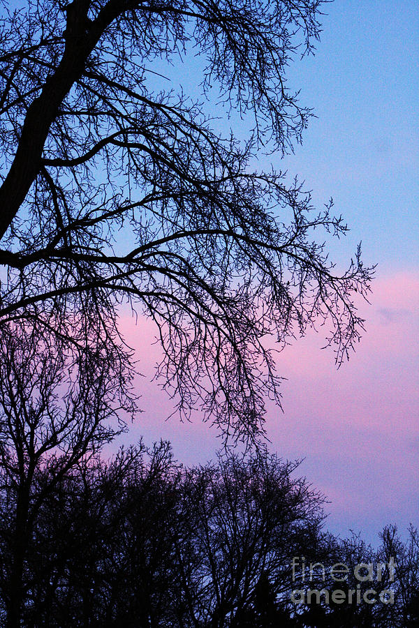 Nature Photograph - Pink Blue Sky by Mary Mikawoz