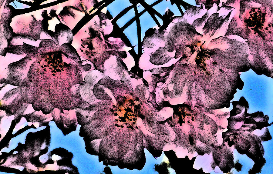 Cherry Blossoms Photograph - Pink Cherry - Black On Blue by Jen White