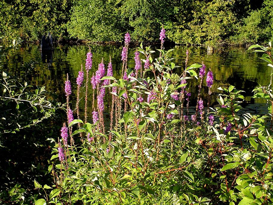 River Photograph - Pink by Dennis Leatherman