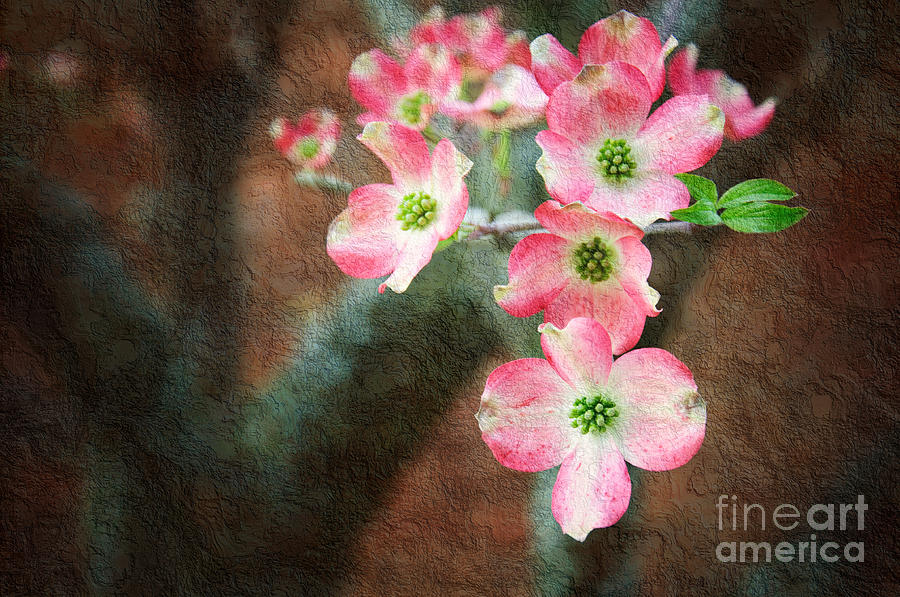 Pink Photograph - Pink Dogwood Cascade by Andee Design