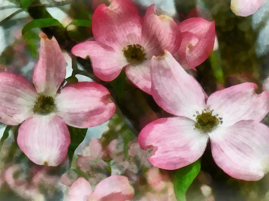 Spring Photograph - Pink Dogwood Closeup by Susan Savad