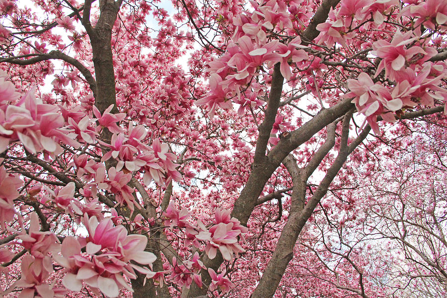 Becky Photograph - Pink Everywhere by Becky Lodes
