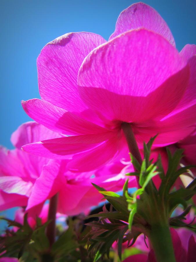 Flowers Photograph - Pink Flowers In The Sky by Eva Kondzialkiewicz