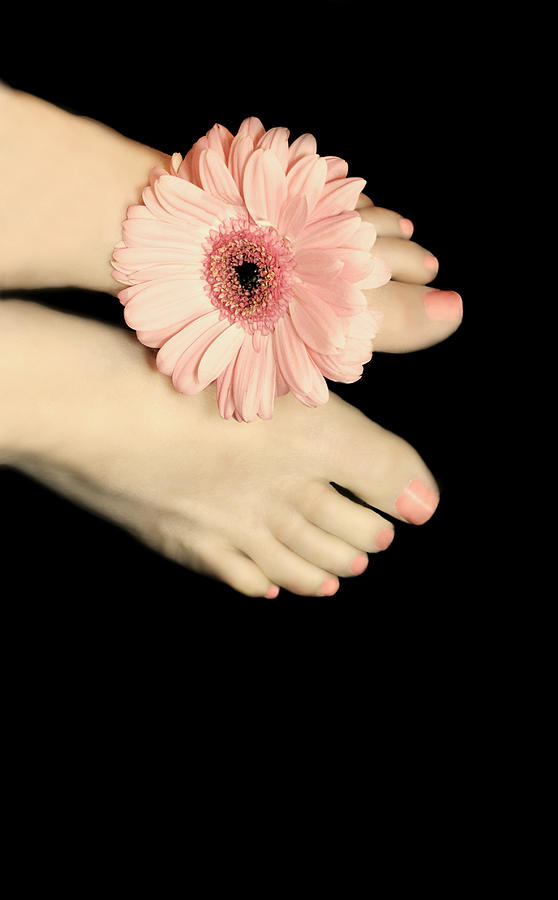 Adult Photograph - Pink Gerbera Daisy by Diana Lee Angstadt