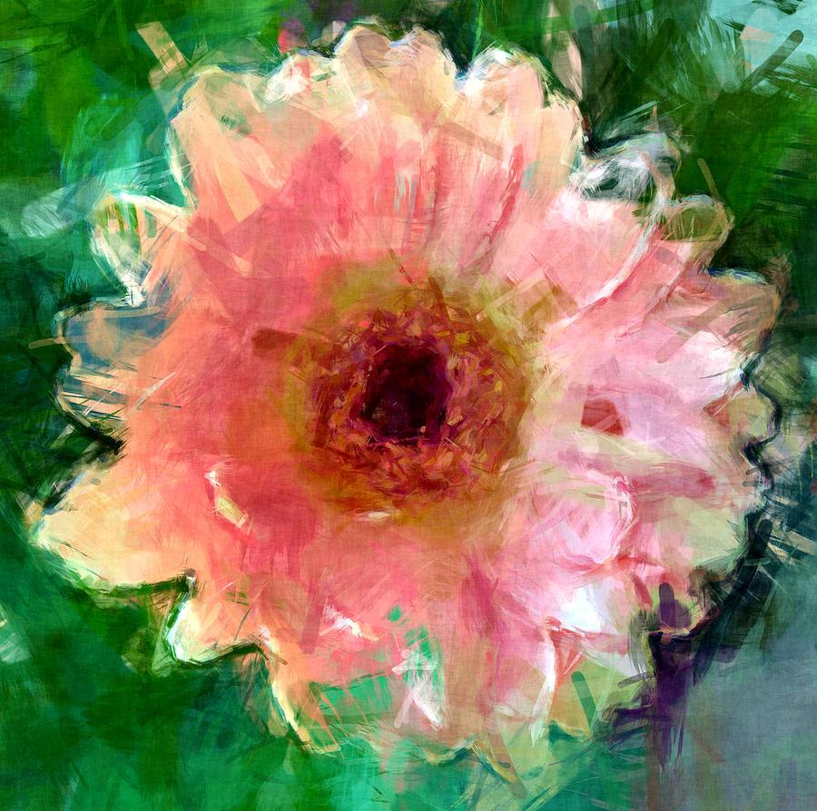 Pink Gerera Daisy Photograph By David G Paul