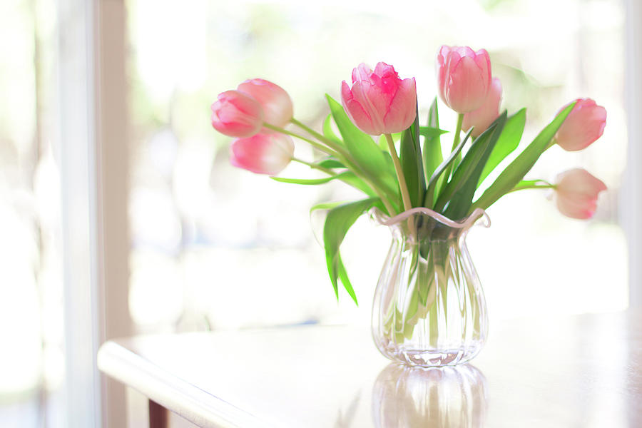 Horizontal Photograph - Pink Glass Vase Of Pink Tulips In Window by Jessica Holden Photography