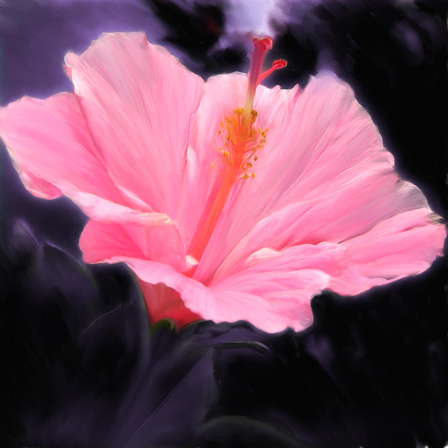 Hibiscus Painting - Pink Hibiscus by Marcos Porcayo