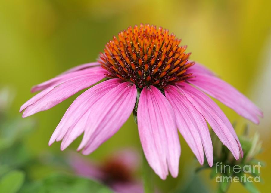 Pink Photograph - Pink Is In by Sabrina L Ryan