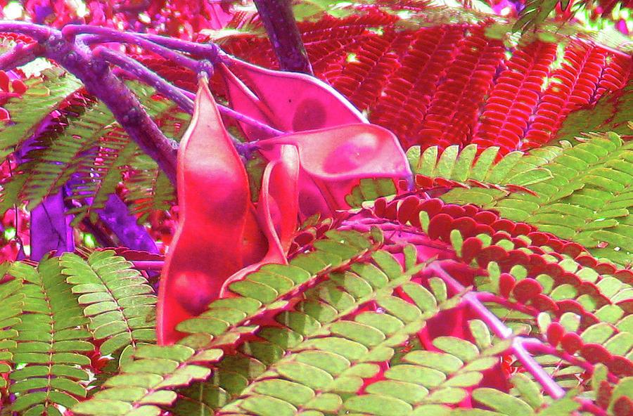 Pink Photograph - Pink Mimosa by Juliana  Blessington