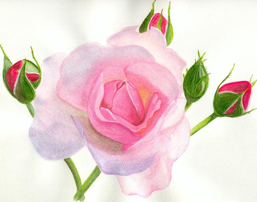 Pink Rose Painting by Becky Yates