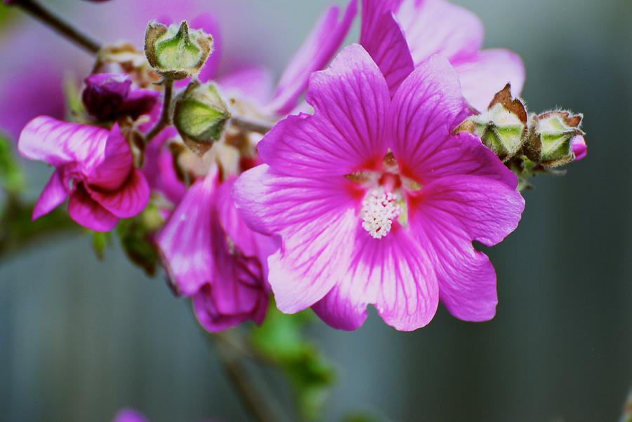 Flower Photograph - Pink Something-or-rather by Eric Tressler