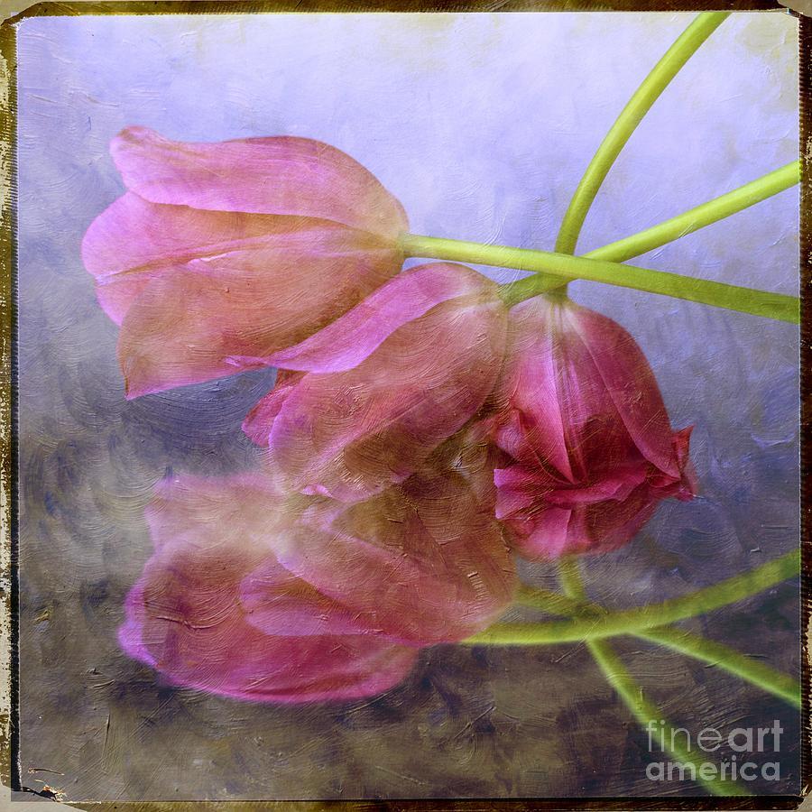 Texture Photograph - Pink Tulips by Bernard Jaubert