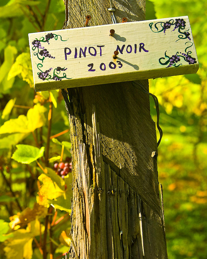Landscape Photograph - Pinot  03 by James Rowland
