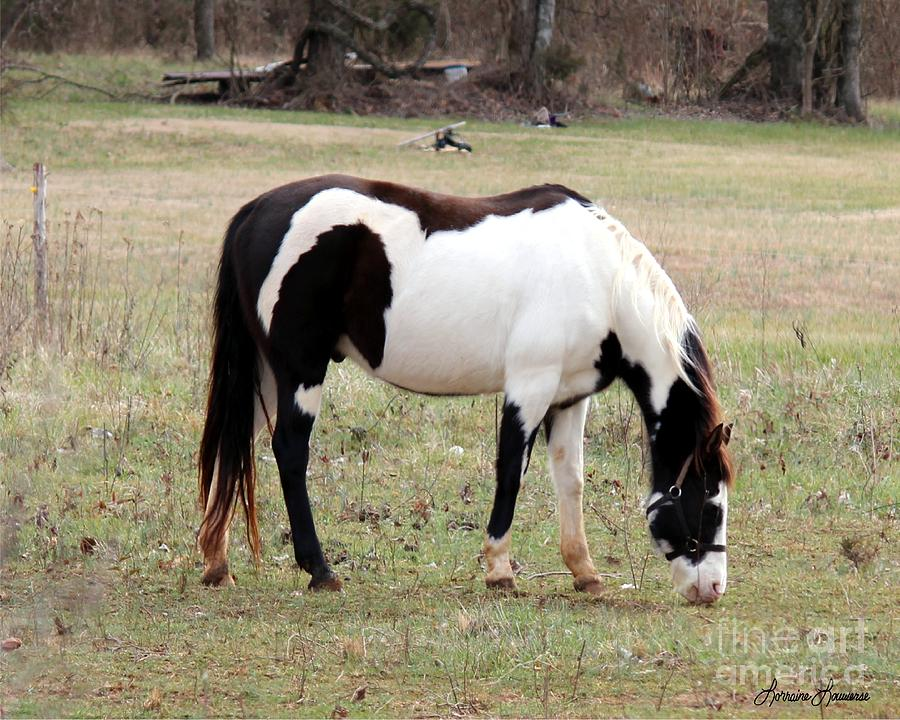 Horses Photograph - Pinto by Lorraine Louwerse