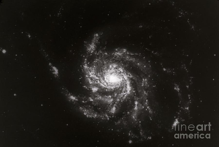 Galaxies Photograph - Pinwheel Galaxy, M101 by Science Source