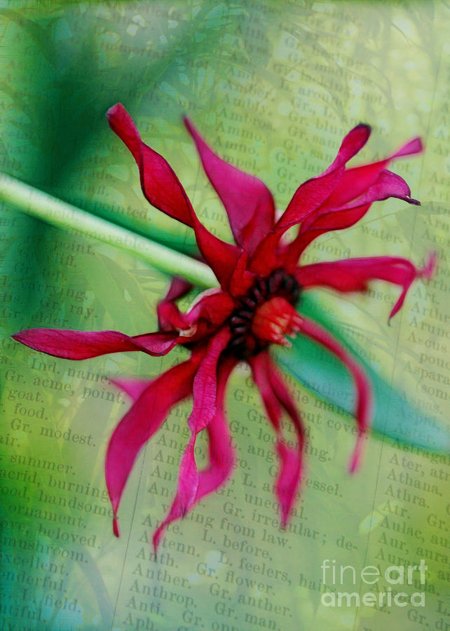 Red Photograph - Pinwheel by Judi Bagwell