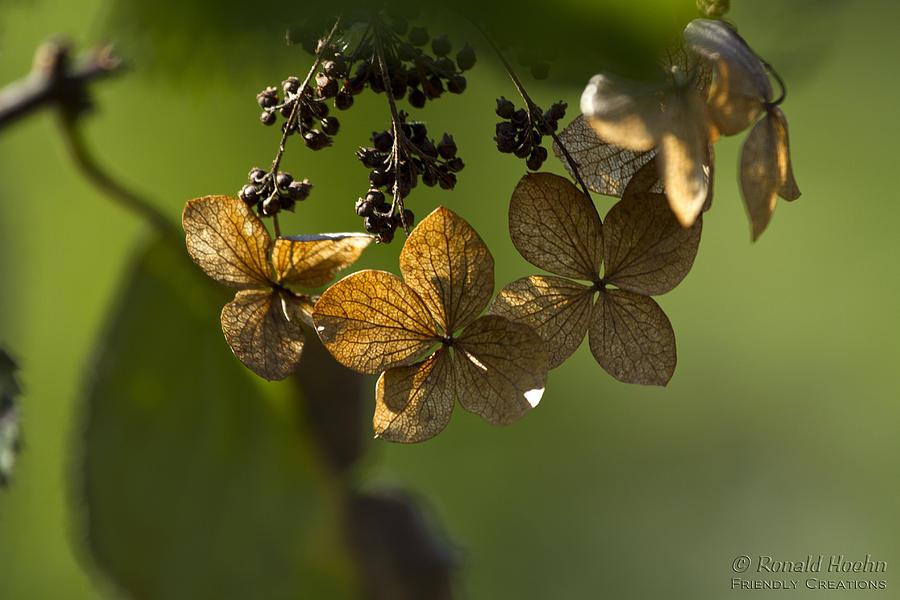Pinwheels Photograph by Ronald Hoehn