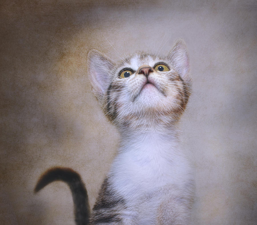 Kittens Photograph - Piper by Pat Abbott