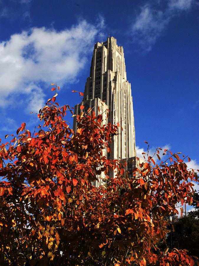 University Of Pittsburgh Photograph - Pittsburgh Autumn Leaves At The Cathedral Of Learning by Will Babin