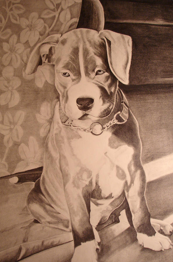 Graphite Digital Art - Pitty Pet Portrait by Yvonne Scott