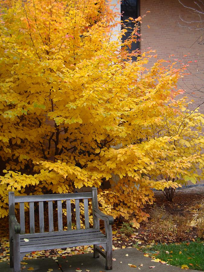 Fall Photograph - Plant Biology by Joseph Yarbrough
