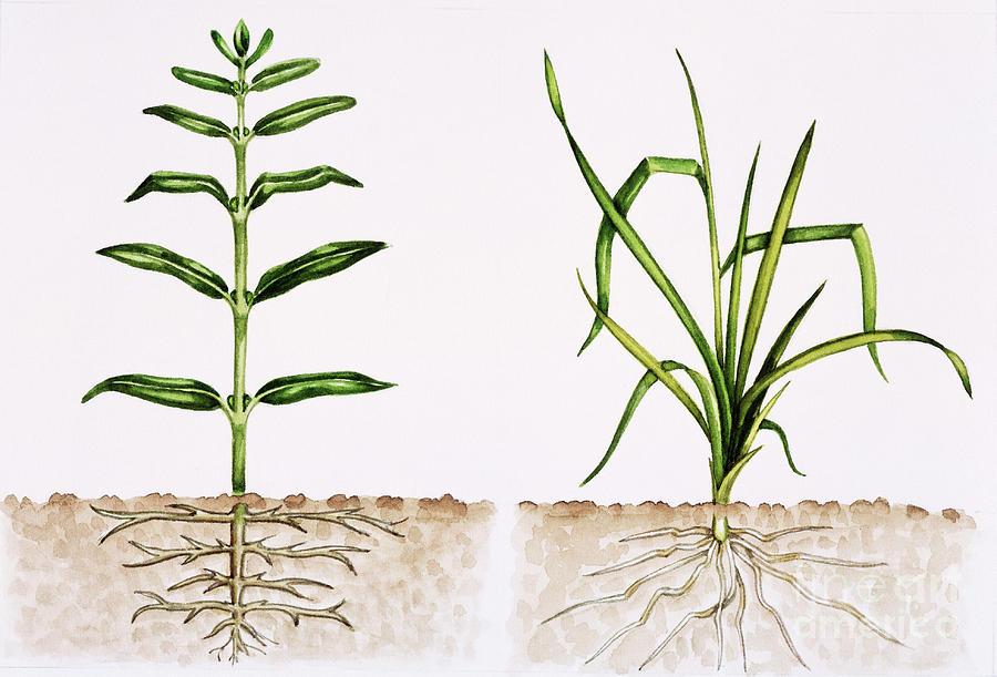 Plants Photograph - Plant Comparison by Lizzie Harper