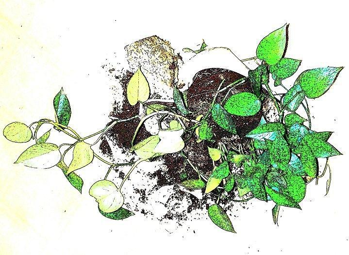 Plant Mixed Media - Plant Falls by YoMamaBird Rhonda