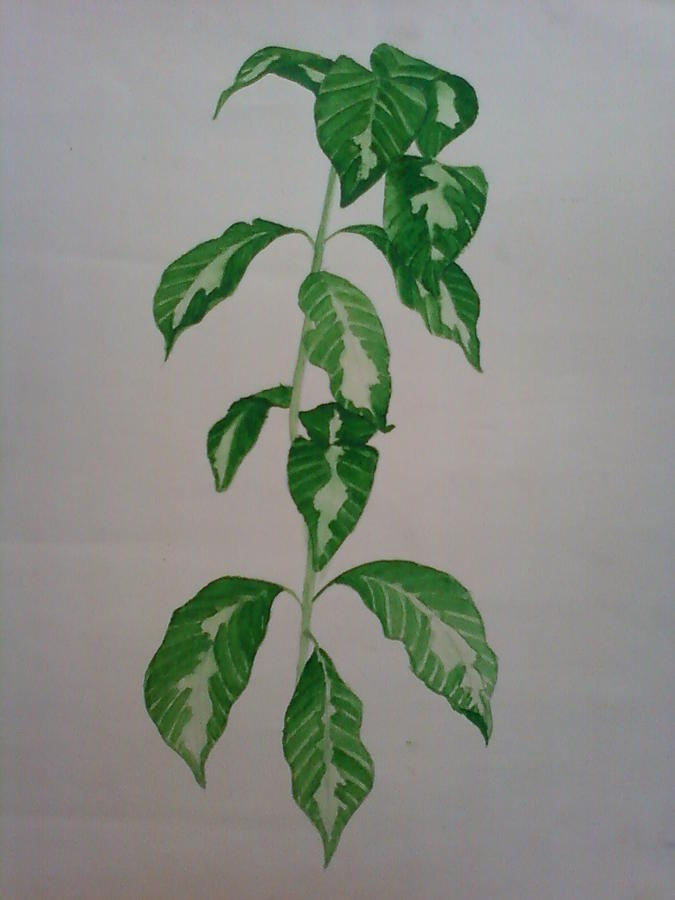 Nature Study Painting - Plant by Shilpa V N