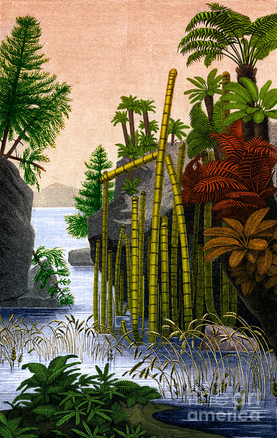Triassic Period Plants Plants Of The Triassic...