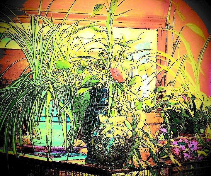 House Plants Mixed Media - Plants by YoMamaBird Rhonda