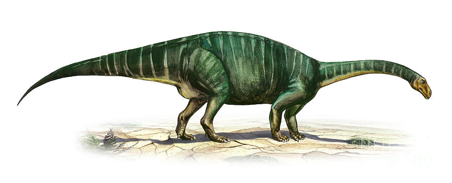 Horizontal Digital Art - Plateosaurus Engelhardti, A Prehistoric by Sergey Krasovskiy