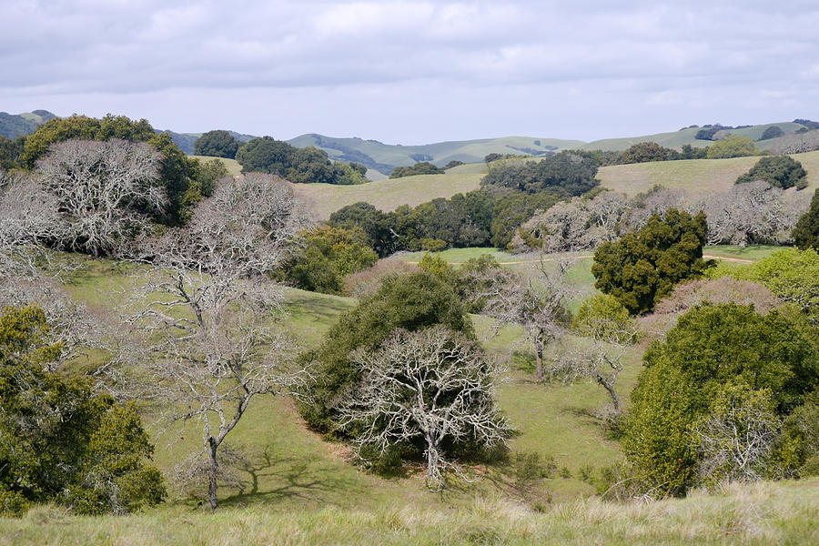 Pleasanton Ridge - North Photograph