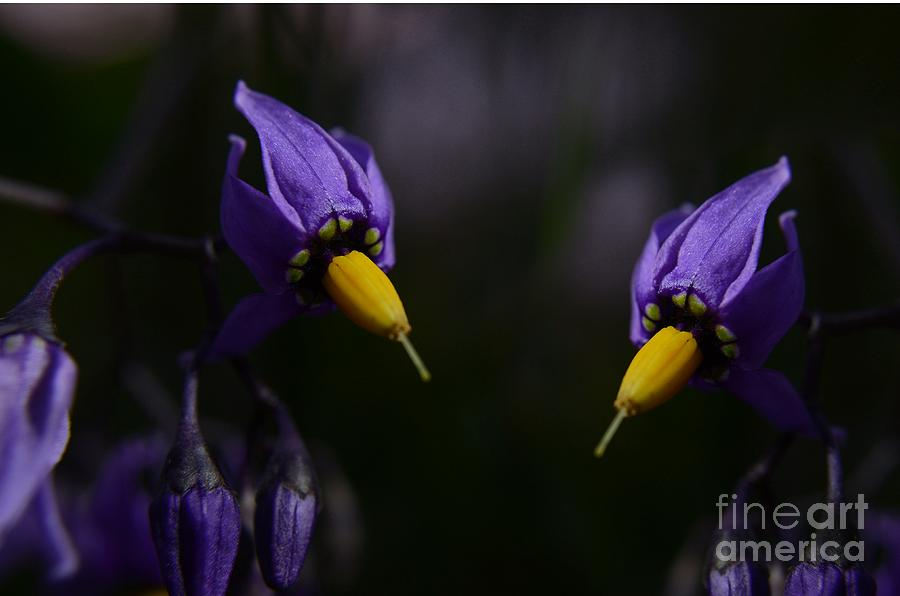 Purple Photograph - Pleasures Of Purple by The Stone Age