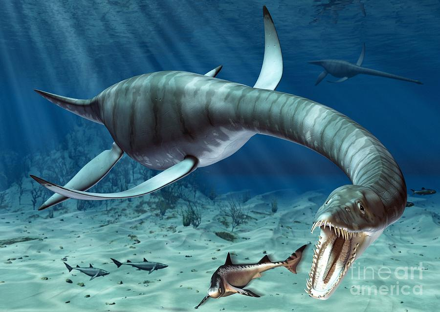 Plesiosaurus Drawing - Plesiosaur Attack by Roger Harris and Photo Researchers