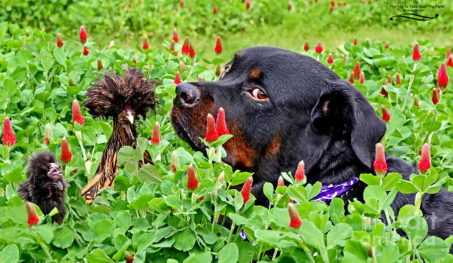 Rottweiller Photograph - Plotting To Take Over The Farm by Rebecca Morgan